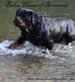 Balou Hause of Avramovic