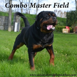 COMBO MASTER FIELD